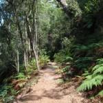 Warrimoo Track