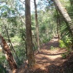 Along the Warrimoo Track