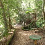 Old Picnic area at base of Cockle Creek lookout track