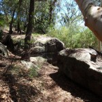 Rocks on the Casuarina track
