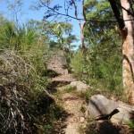 Casuarina Track