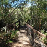 Top of Casuarina Steps