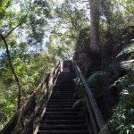 Climbing up the Casuarina Stairway
