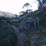Flying fox track near Guthega service trail