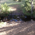 Creek at campsite