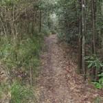 Magdala Gully Track