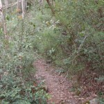 Track in Magdala Gully