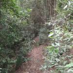 Track to Martins Falls