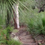 Bushland surrounds the steps to Blue Pool