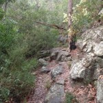 Rock walls in bushland near Blue Pool Track