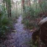 Bushtrack down into Sassafras Gully