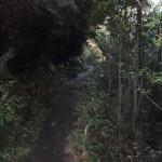Sassafras Gully Track