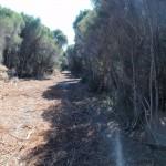 Wide sandy trail