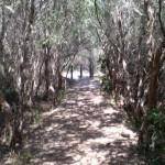 Track near Henry Head