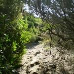 Track near Maroubra