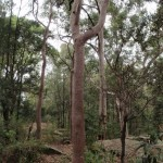 Tall dry forest