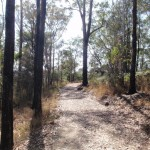 Dry forest along the trail