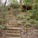 Steps to Dingeldei Picnic Area