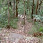 Mt Bouddi Trail