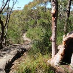 Footpath through the bush