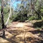 Walking along the Pearl Beach / Patonga fire trail