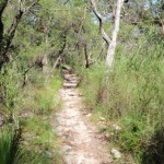 Flat section of Patonga Track