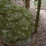 Turtle Shell Rock
