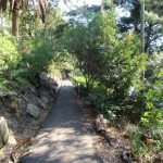 Maintained walking tracks in Cremorne Reserve