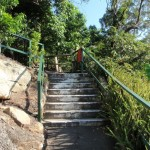 Steps on track in Cremorne Reserve