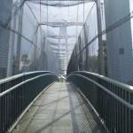 Bridge across the freeway