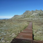 Looking abck along the Mt Kosciuszko Lookout path to the main track