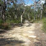 Elvina Track near West Head Rd.