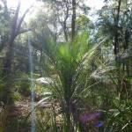 Plant on Elvina Track