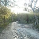 Perimeter Trail, near Terrey Hills