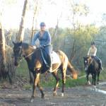 Horse riding on Cullamine Rd, near Terrey Hills