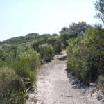 Henry Head Track, near La Perouse