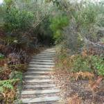 Timber steps on Henry Head Track, near Botany Bay National Park