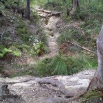 The Engadine Bushtrack