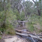 There are occassional obstacles along the trail