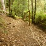 Intersection with timber steps close to Boarding House Dam in the Watagans