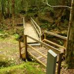 Timber bridge crossing creek near the moss wall in the Watagans