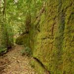 Moss Wall near Boarding House Dam in the Watagans