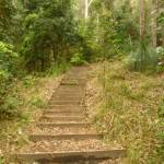 Timber steps leaving the Gap Creek picnic area in the Watagans