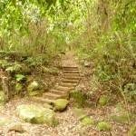 Steps near Gap Creek picnic area in the Watagans