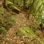 Track near Gap Creek Falls in the Watagans