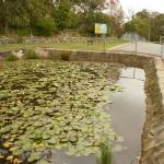 Pond at Mt Sugarloaf car park, near Newcastle