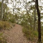 Track near Newcastle on Mt Sugarloaf