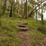 Timber steps near Mt Sugarloaf