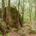Rock formation in Turpentine forest