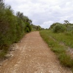 Winifred Falls service trail